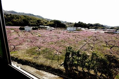 【新蔵周辺の風景】酒蔵の窓からのぞむ桃畑に囲まれた蔵からの風景1