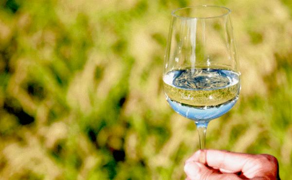 私たちの蔵は、日本で唯一、日本酒、食酢、梅酒を生業として醸す蔵元です。赤酢の原料は自社で醸した日本酒の酒粕。和歌山産山田錦100%、29%精白の初仕込み限定酒「純米大吟醸 雜賀孫市」は、吟醸香とともにキレのあるフレッシュ感あるきれいなお酒です。